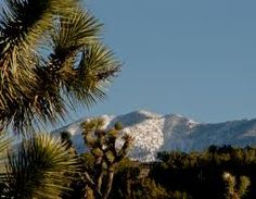 Palmdale California, cactus and snowy mountains!