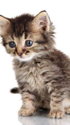 Pretty Cats, Beautiful Cats, Animals Beautiful, Cute Animals, Kittens Cutest, Cats And Kittens, Water Aerobic Exercises, Cat App, Wallpaper Pc