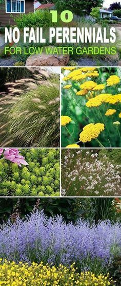 10 No Fail Drought Tolerant Perennials for Low Water Gardens