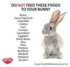 Keep your loved pet rabbit safe. Read this list of foods to never feed to your r… Keep your loved pet rabbit safe. Read this list of foods to never feed to your rabbit. Please always check with your vet before introducing any new food to your pet. Meat Rabbits, Raising Rabbits, Pet Bunny Rabbits, Food For Rabbits, Cages For Rabbits, Veggies For Rabbits, Caring For Rabbits, Baby Bunnies Care, What To Feed Rabbits