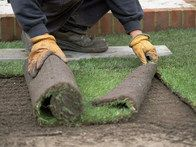 Fall is the cut-off for laying sod in regions with tough winters. Make sure sod is down to allow at least four weeks of growth before frost typically arrives in your area. In mild winter zones, you can lay sod all winter long. Outdoor Projects, Garden Projects, Outdoor Ideas, Backyard Ideas, Garden Ideas, How To Lay Sod, Growing Grass From Seed, Palmers Garden Centre, Shade Grass