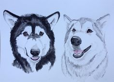 A special secret watercolour commission of two beautiful Alaskan malamutes www.etsy.com/shop/mscraftycreatures