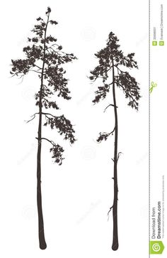 douglas fir silhouette - Google Search