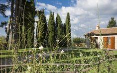 Borgo Traditional Wedding, Tuscany, Vineyard, Wedding Venues, House Styles, Outdoor, Home Decor, Wedding Reception Venues, Outdoors