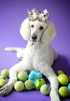 I rather have all of these balls instead of this stupid crown!!