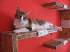 Cool cat shelves - can find a decent link though for any kind of how-to details.