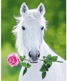 In the spirit of valentines Day #Horses #Valentinesday
