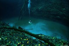 Underwater River in Mexico-The strange natural phenomenon is said to be made possible by aa thin layer of hydrogen sulfate that causes the freshwater above to separat...