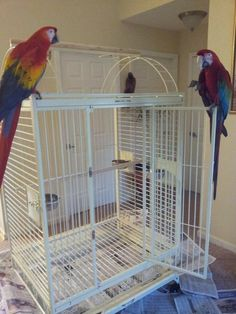 The best 10 large bird cages for beloved pets : Bird Cages For Less. Bird cages for less. Large Bird Cages, Create A Board, Animal Projects, Big Houses, Parrot, Birds, Pets, Parrot Bird, Large Homes