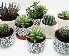 Lovely patterns on a sweet cluster of wheel-thrown succulent & cactus pots!