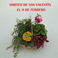 Sorteo de San Valentín sorteo 9 febrero