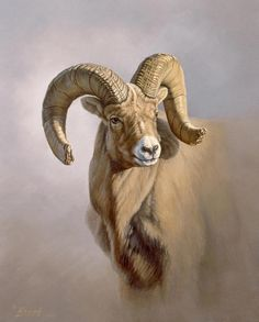 ram-portrait-paul-krapf.jpg (723×900)