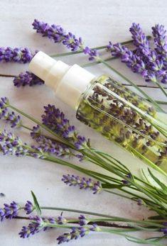 Jaro, léto = hmyz / Použití bylinek / Rady, recepty & bylinkové tipy / SONNENTOR.cz - SONNENTOR - Tady roste radost - biočaje a biokoření