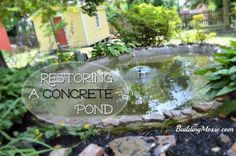 Restoring a Concrete Pond :: Repairing Cracks, Parging and Sealing with Pond Shield Epoxy - http://www.buildingmoxie.com/restoring-concrete-pond/ #Landscaping, #Materials(Concrete), #Ponds, #ProsWeKnow, #Review, #WhatIDid