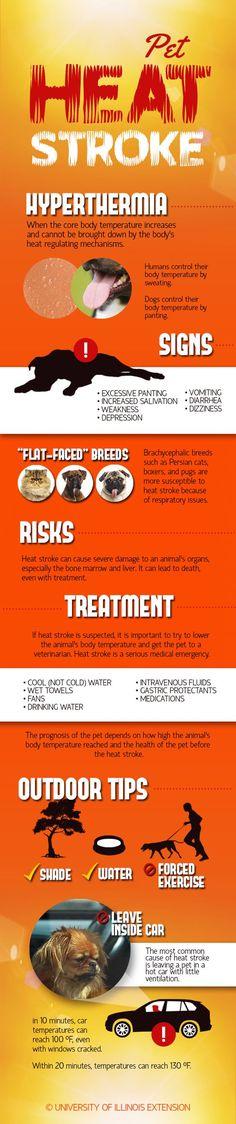 Pet Heat Stroke Infographic: