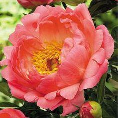 alle planten in voorraad bij kwekerij Bastin, je kunt ze hier online bestellen of op de kwekerij kopen