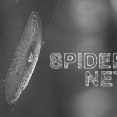 Spider - Fonts.