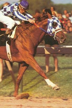 The Mighty Secretariat stretches out as he races down the straight, in the 1973 Preakness Stakes.