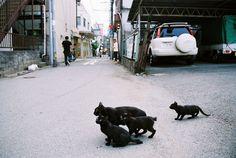 TEAM BLACK CAT | Flickr - Photo Sharing!