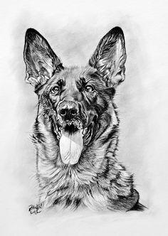 Kresba - portrét ovčáckého psa Bambi