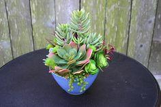 Faux Succulent Arrangement Modern Blue Pot Succulent