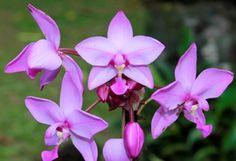 Flora del amazonas - Orquídea