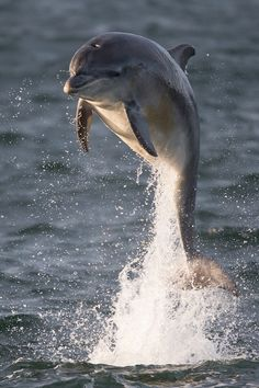 "vurtual: "" Dolphin (by Tony House) """