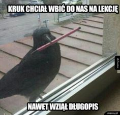 The Best Funny Pictures Of Today's Internet A crow tried to go in our class room and he had a pen he's more prepared than half the kids in my school Funny Pictures For Kids, Funny Animal Pictures, Funny Photos, Funny Animals, Funniest Pictures, School Humor, Mom Humor, Wtf Funny, Hilarious