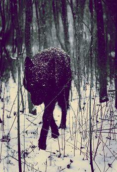 Lobo - En vida salvaje