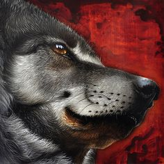 Orion Wolf Painting by Jurek Zamoyski - Orion Wolf Fine Art Prints and Posters for Sale