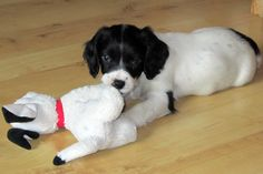 Rosie playing with her first toy