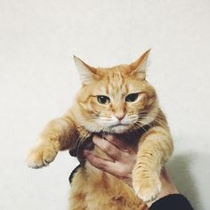 カメラマンはお姉ちゃん    #ねこのいる暮らし #猫との暮らし #猫と暮らす #にゃんすたぐらむ #猫#cat #cats