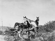 Three Crow men and their horses. 1905. Photo by Edward S. Curtis.