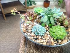 Another World Colorful Succulent Centerpiece by AnotherWorldPlants, $85.00