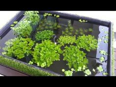 "Urban Aquaria: 108 Litre ""Puddle Garden"" Outdoor Balcony Pond"