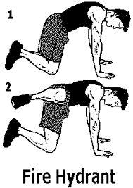 Bildergebnis für exercice musculation fessier