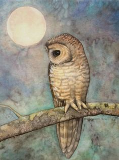 A midnight owl sits on a branch on a moonlit night. Art by Molly Harrison. Cool Paintings, Paintings For Sale, Northern Spotted Owl, Owl Art, Mermaid Art, Wildlife Art, Unique Art, Fine Art America, Fine Art Prints