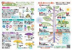 小学理科【植物のつくりと働き】 学習ポスター&クイズテスト 無料ダウンロード