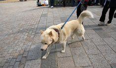 como adiestrar a un perro para cruzar la calle