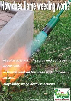 Learn how to properly flame weeds for chemical free weed control in your yard and organic garden. Torch kits provides the perfect flame weeder around the home & garden. Used for chemical free spot weeding, lighting charcoal, chimineas, campfires and more. Get Rid Of Dandelions, Killing Weeds, Organic Weed Control, Creative Landscape, Weed Killer, Living Off The Land, Garden Gifts, Live Plants, Outdoor Projects