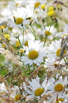 Wildblumen Sommerwiese Bilder: Poster von Tanja Riedel bei Posterlounge.de