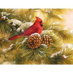 December Dawn Cardinal Christmas Cards  http://www.pinterest.com/source/lang.com/