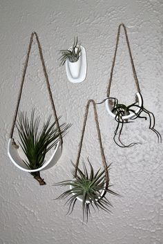 DIY air plant holders in kitchen Learn about irrigating gardens at ACS Garden - All For Herbs And Plants Air Plant Terrarium, Terrariums, Air Plant Display, Plant Decor, Hanging Air Plants, Indoor Plants, Planting Succulents, Planting Flowers, Miniature Greenhouse