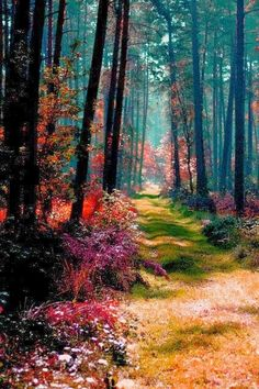 "Magical Forest, Poland. ""Why are there trees I never walk under But large and melodious thoughts descend upon me?"" ~Walt Whitman, Leaves of Grass, 1892"