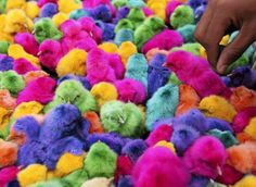 Colored chicks are sold during the run-up to Easter in downtown Amman, Jordan, on April (Reuters/Ali Jarekji)