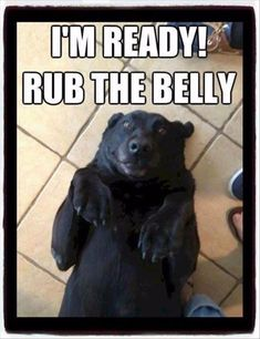 Aweeeee that's the exact same face and position my dog gets into when he wants me to rub his belly #dogsfunnyfaces