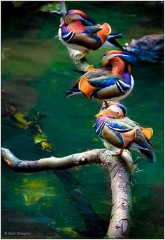 Colorful-World-of-Birds-5