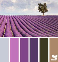 Color Palette • Shades Of Purple