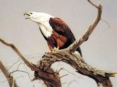 Decreto Águila