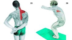 Lateral Flexion with a Dowel Muscles Emphasized: External Obliques and Latissimus Dorsi Extend the spine and push the hips out to the side, while keeping the shoulders rotated outwardly. Don't perform this stretch if.